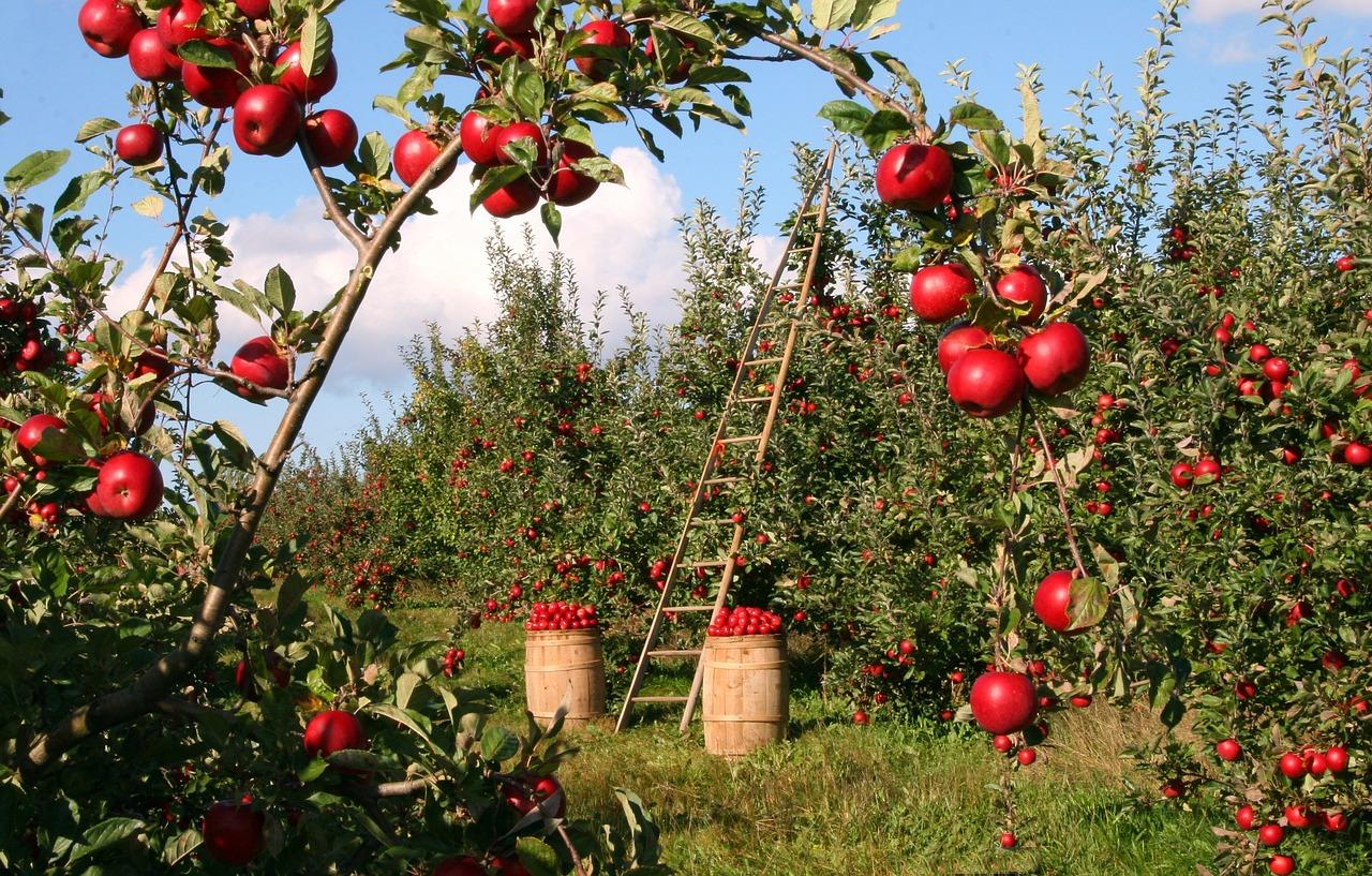 Održavanje voćnjaka
